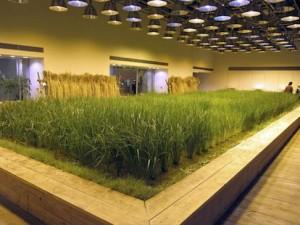 Food Growing Room