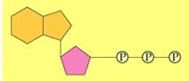 simple-ATP