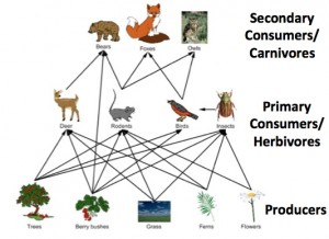 A food web showing trophic levels