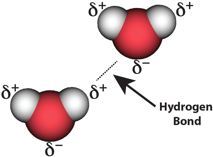 12_hydrogen bond, two water molecules, LABELED