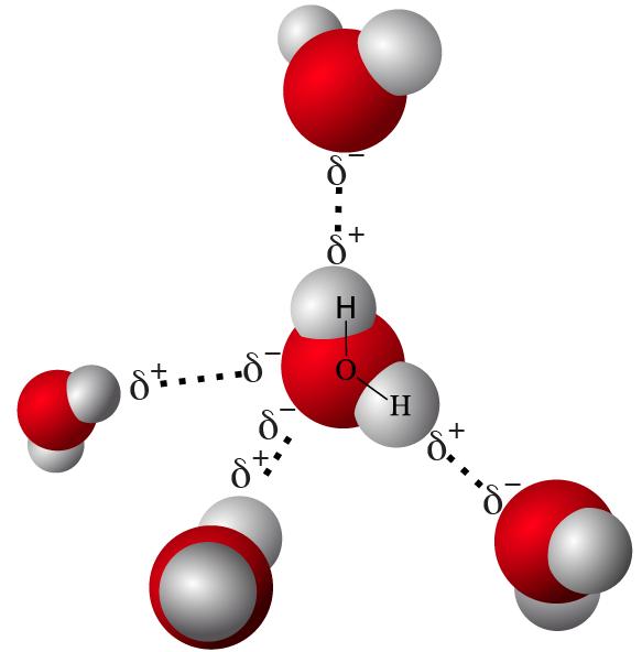 14-hydrogen bonds in water