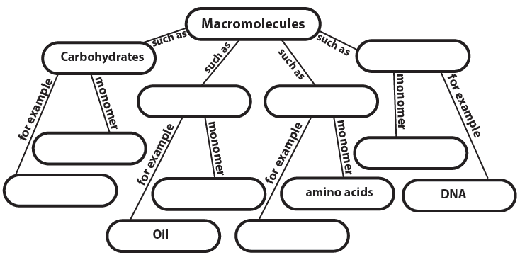 Concept Map Of Macromolecules.Biochemistry 2 Carbohydrates Interactive Tutorial