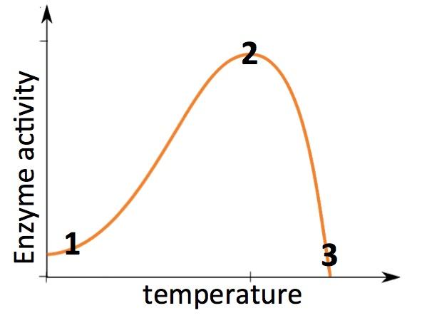 enzymesTemperature