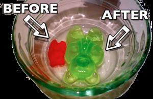 00a_gummy bear osmosis