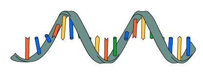 04_RNA is single stranded
