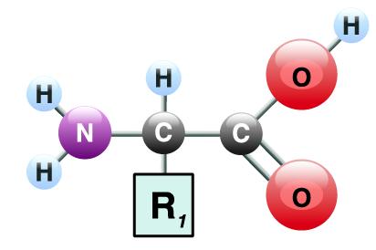 08_amino acid