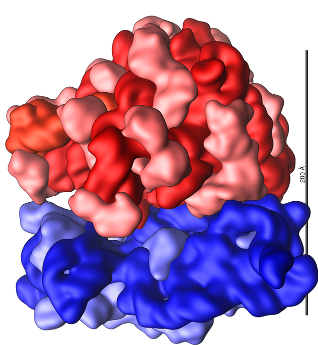13a_ribosome, rotated