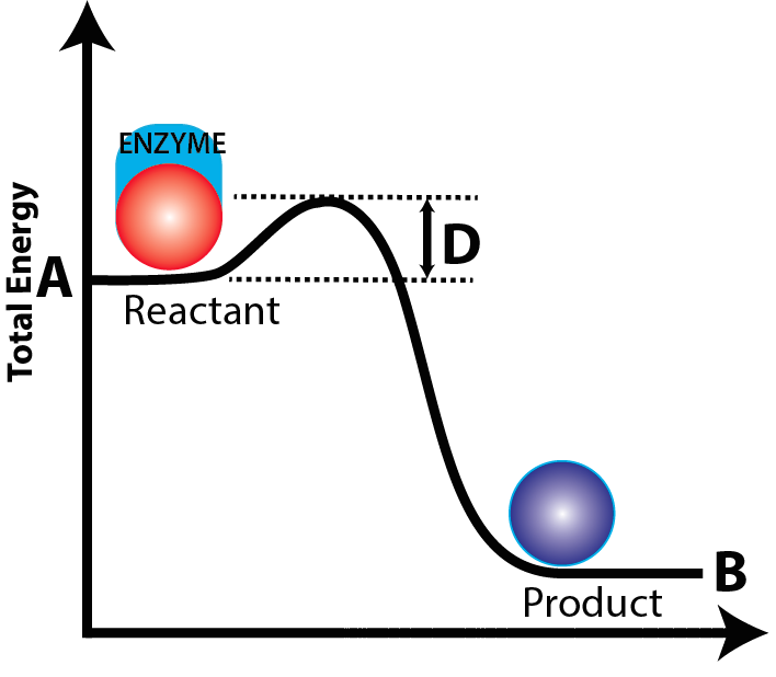 activation energy 2(with enzyme)