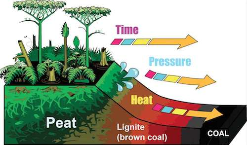 Carbon dating process ppt 8