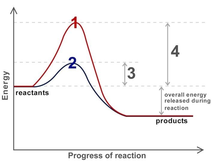unlabelled diagram of enzyme reaction index of /wp-content/uploads/2014/smv_qwiz/qwiz_images