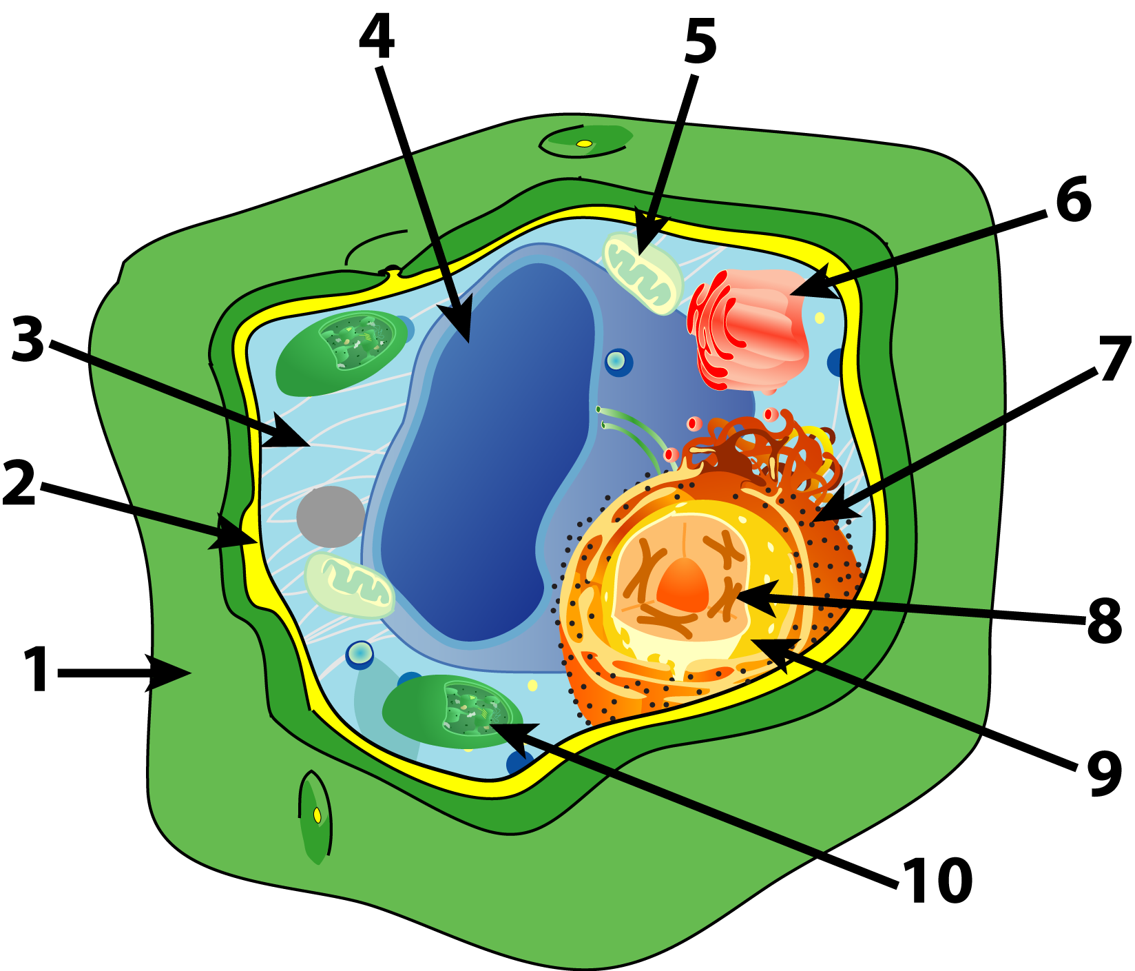 Cells to human organism lessons tes teach plant cell parts quiz sciencemusicvideos ccuart Image collections