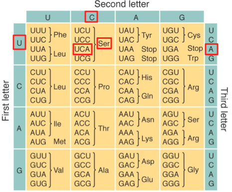 12_UCA genetic code example, tabular