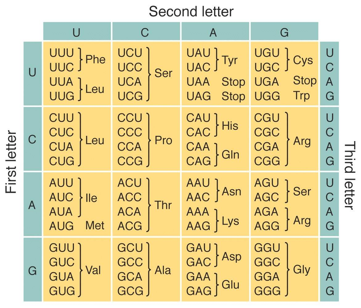 genetic code, tabular