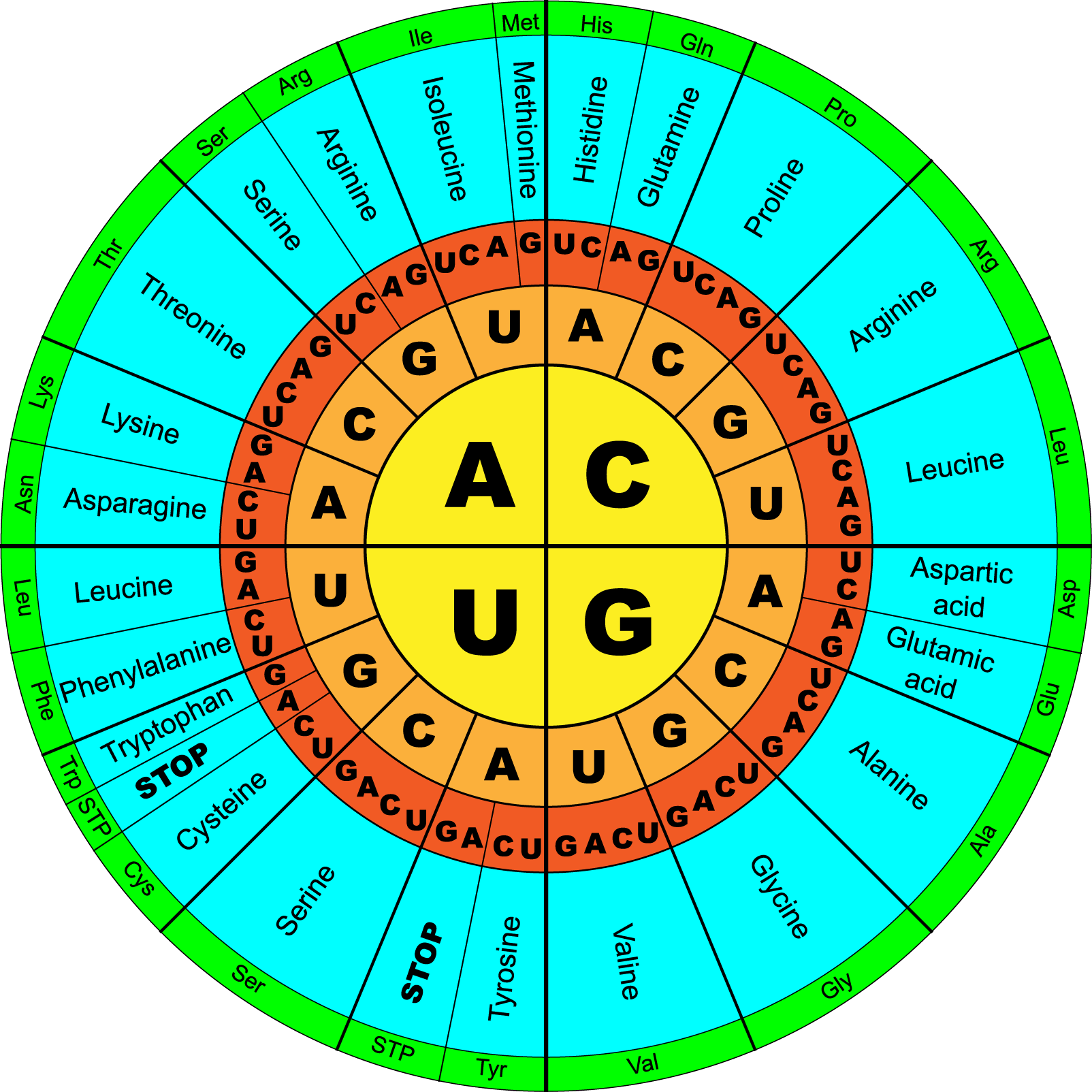 genetic-code.circular, colored