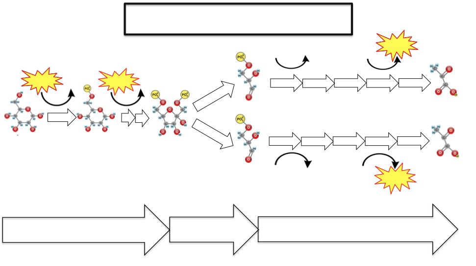 enzymatic diagram of glycolysis glycolysis interactive lyrics and flashcards     sciencemusicvideos  glycolysis interactive lyrics and