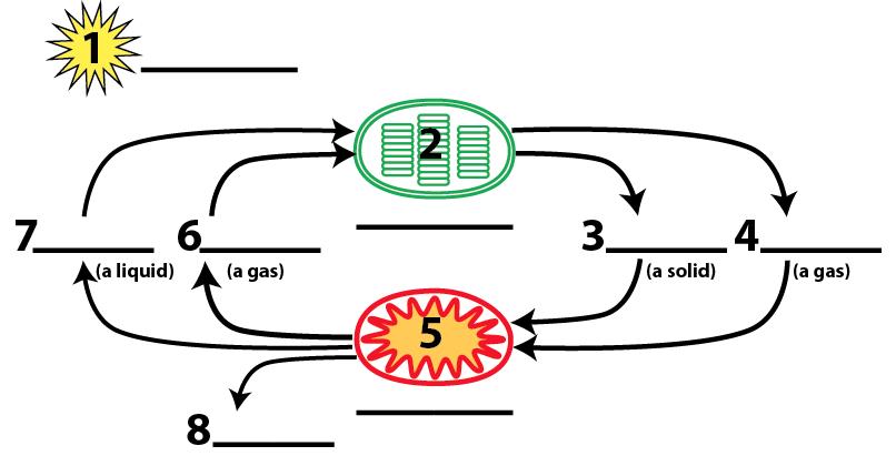 05_psn and resp (chlor and mito)