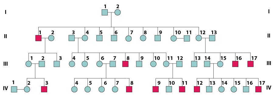 Genetics Practice Problems Pedigree Tables Worksheet ...