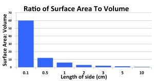 13_surface area-volume ratio