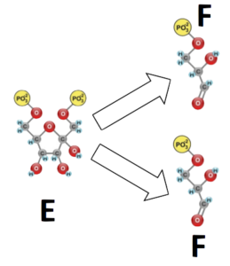 06_glycolysis-cleavage