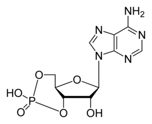 800px-cyclic-adenosine-monophosphate-2d-skeletal