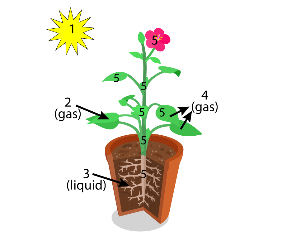 Photosynthesis 1 an introduction ap biology interactive tutorial no please try again ccuart Image collections